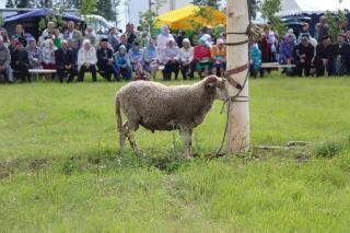 Сабантуй в селе Денискино 2017